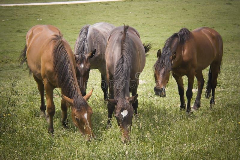 De familie van paarden stock afbeelding