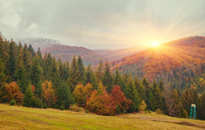 De fantasiebos van landschapsnice met kreek in de gouden Herfst stock foto