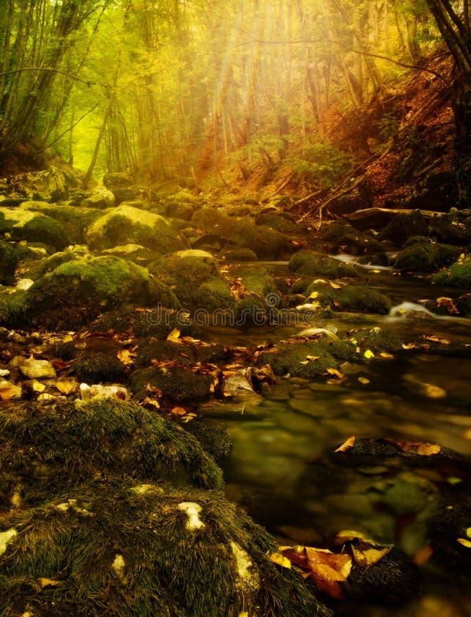 De fantastische herfst in het bos. royalty-vrije stock afbeelding