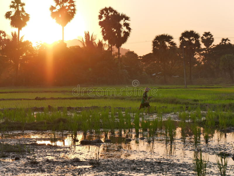 4 de febrero de 2017, Hpa-an Myanmar - throu que camina del muchacho asiático joven foto de archivo libre de regalías