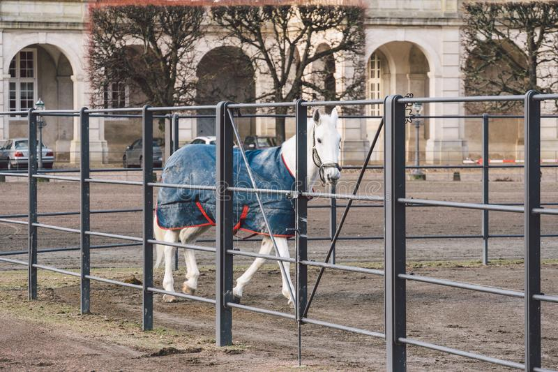 20 de febrero de 2019 dinamarca copenhague Adaptación de entrenamiento de puente de un caballo en el establo real del castillo Ch imagen de archivo libre de regalías