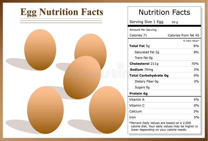 De Feiten van de eivoeding stock afbeeldingen