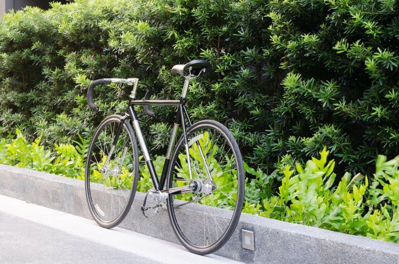 De fiets van de rasweg met boom stock foto