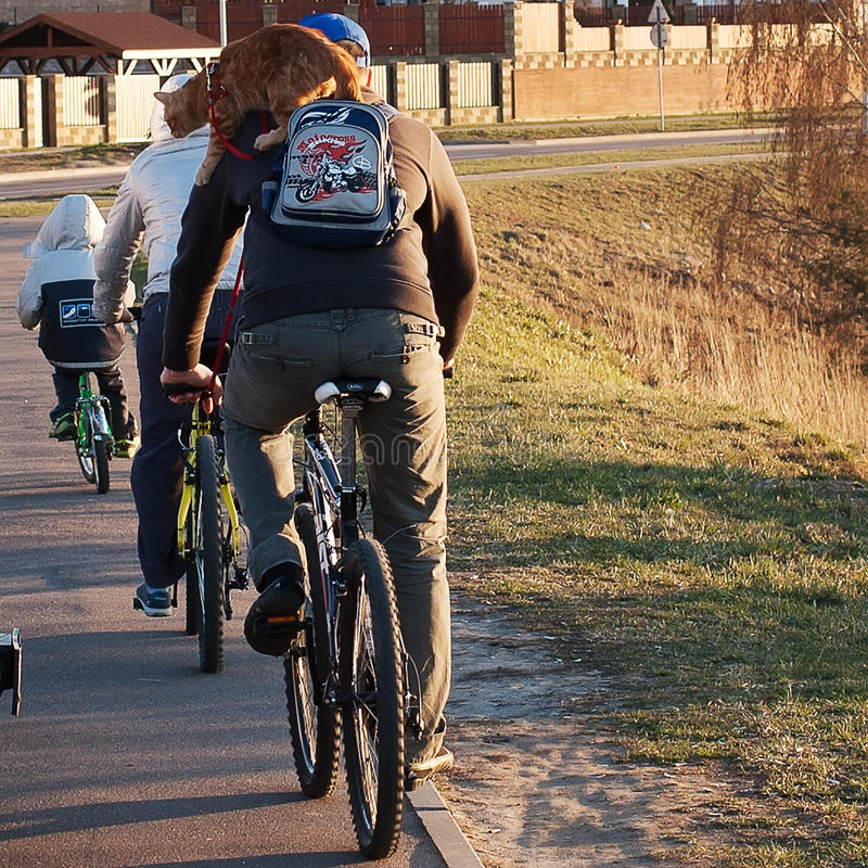 De fietsen van de familierit met kat stock afbeelding