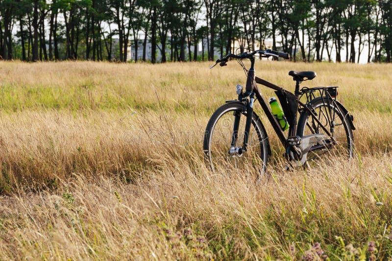 De fietsenrekken onder het lange gras op de weide De recentere zomer, is het gras geel royalty-vrije stock foto