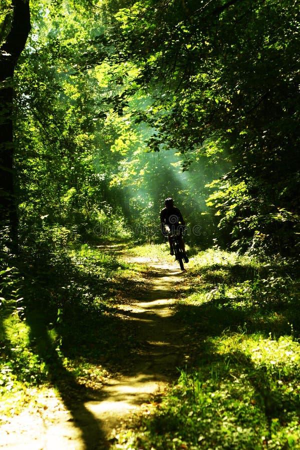 De fietser van de berg in het meest forrest royalty-vrije stock afbeeldingen