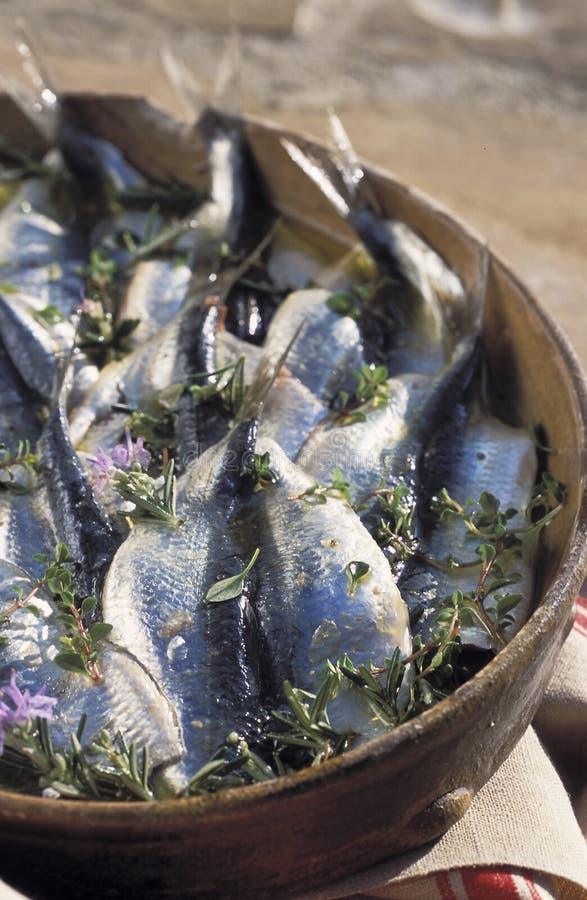 De filets van de sardine die met thyme en rozemarijn worden gemarineerd royalty-vrije stock foto