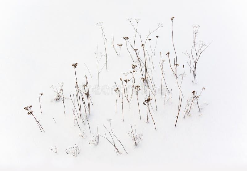 De fines plantes sèches se dressent dans la neige Motif, arrière-plan photo stock