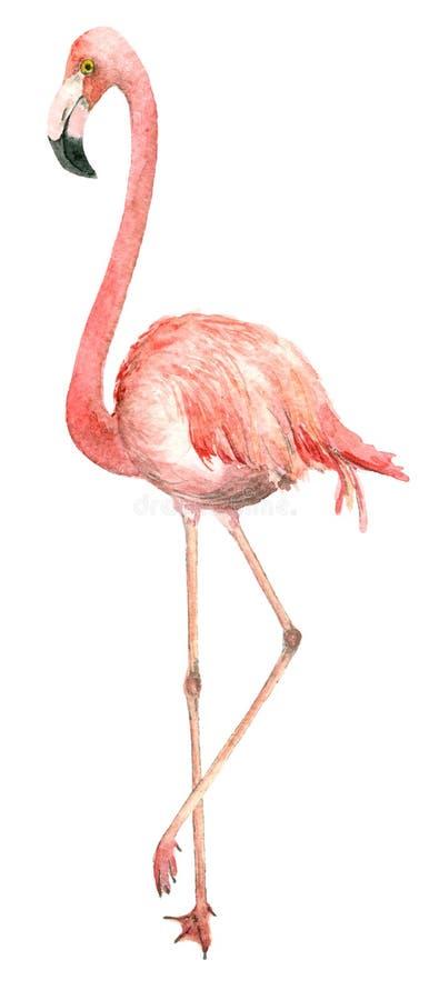 De flamingo van de waterverfvogel royalty-vrije illustratie