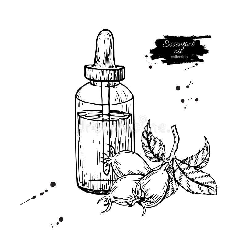 De fles van de rozebotteletherische olie met bessenhand getrokken vector illust royalty-vrije illustratie