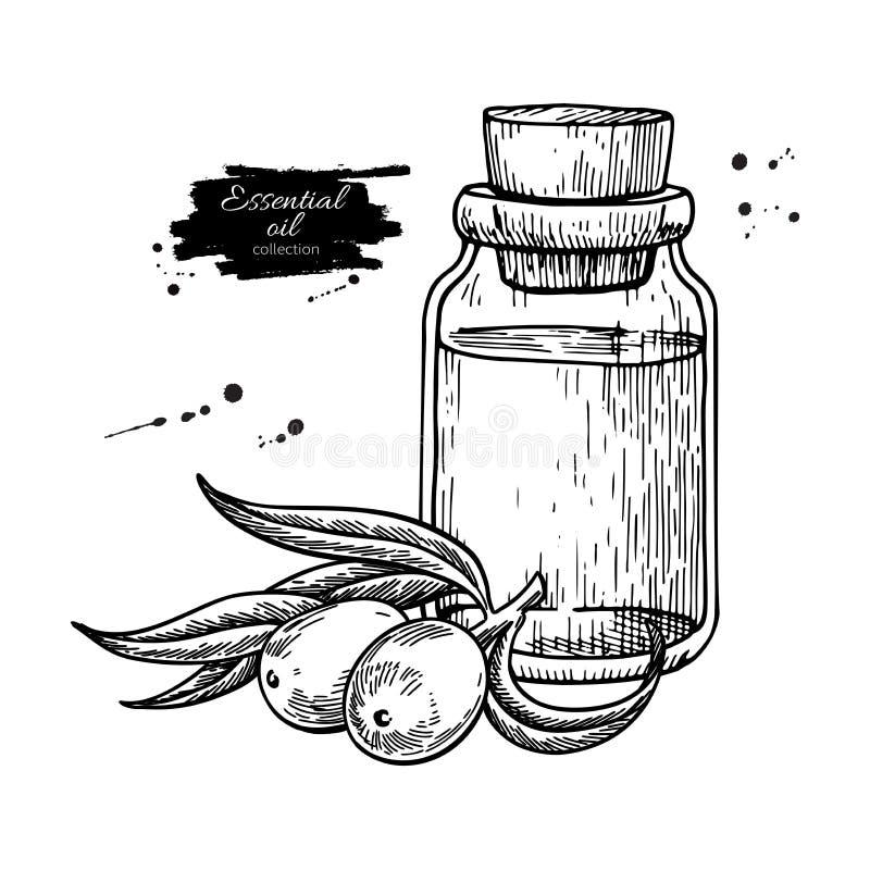De fles van de Seabackthornetherische olie met bessenhand getrokken vector i royalty-vrije illustratie