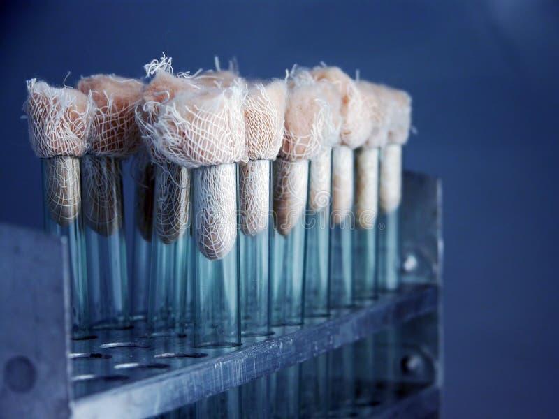 De flessen van het laboratorium stock fotografie