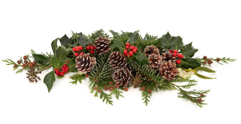 De Flora En De Fauna Van De Winter Royalty-vrije Stock Afbeelding