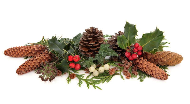 De Flora En De Fauna Van De Winter Stock Afbeeldingen