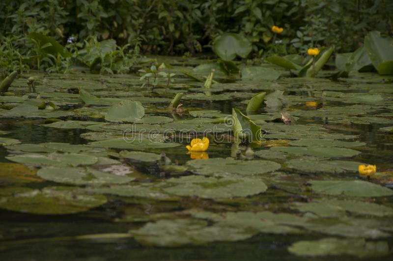 De flora van de Oekraïne Meer Bloemen stock afbeeldingen