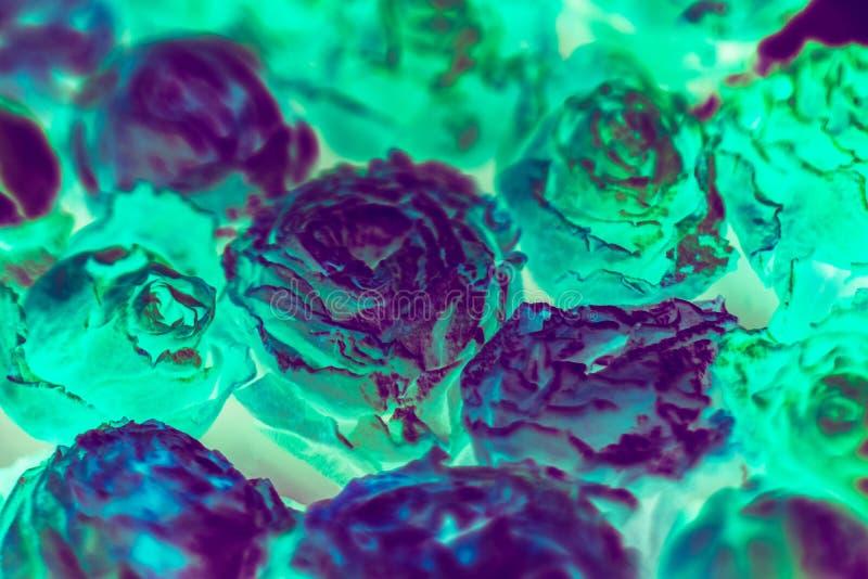De fluorescente conceptuele bloemachtergrond nam toe stock fotografie