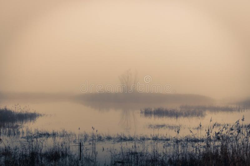 De foggy wetlands stock foto's