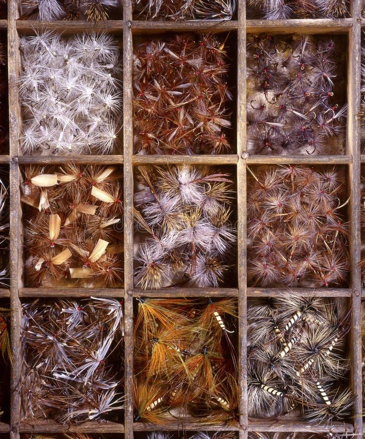 De forelvliegen van de krijtstroom royalty-vrije stock afbeeldingen