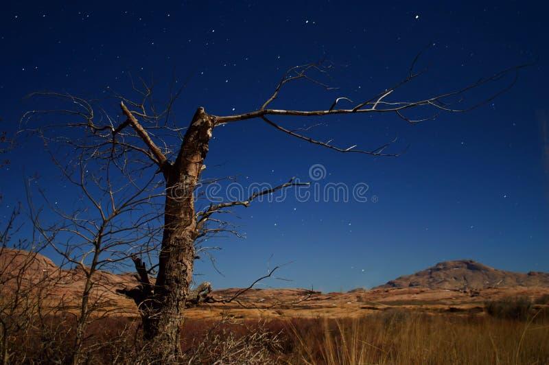 De foto's dode boom van de nacht in de woestijn royalty-vrije stock afbeelding