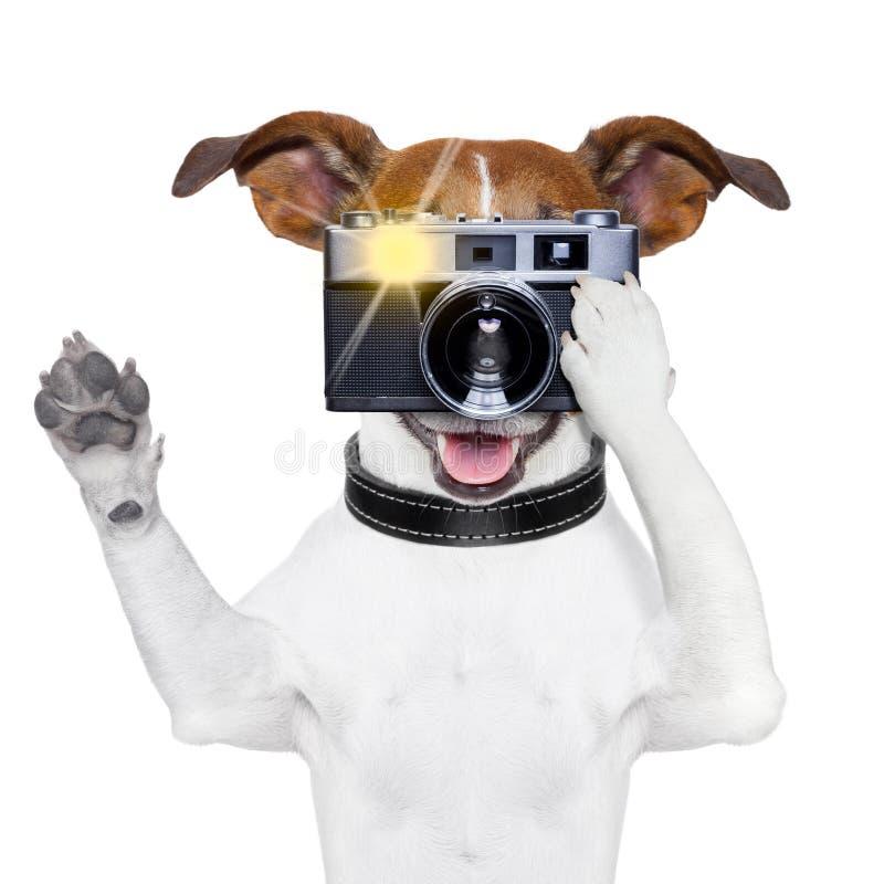 De foto van de hond stock afbeeldingen