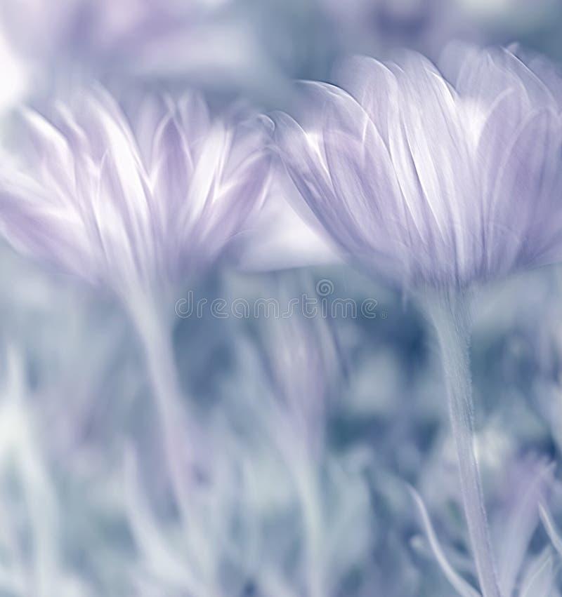 Verse de lentebloemen royalty-vrije stock afbeeldingen