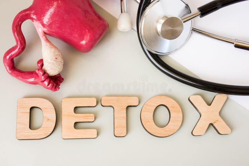 De foto van het baarmoeder detox concept Word detox van volumetrische brieven is dichtbij 3D baarmoeder model en medische stethos stock foto