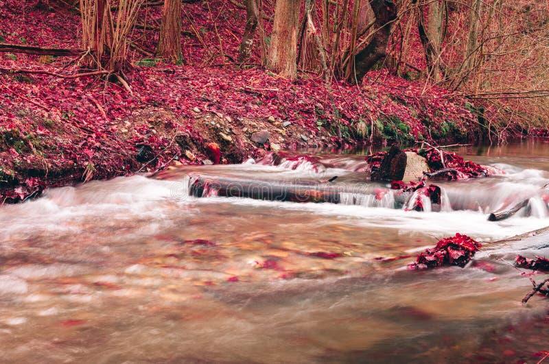 De foto van mooie en kleurrijke kreek met glashelder water en purple doorbladert ter plaatse in diepe bos Kleine waterval met royalty-vrije stock foto