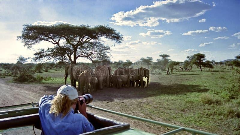 De fotograaf van het wild royalty-vrije stock afbeelding