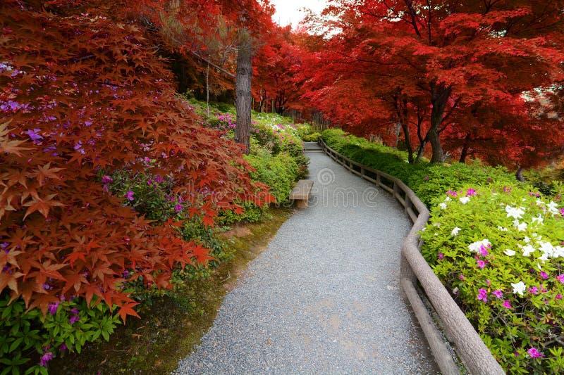 De fusie van de bloemen van de de lenteazalea en de bladeren van de de herfstesdoorn leidde tot met valse rode tinten stock afbeeldingen