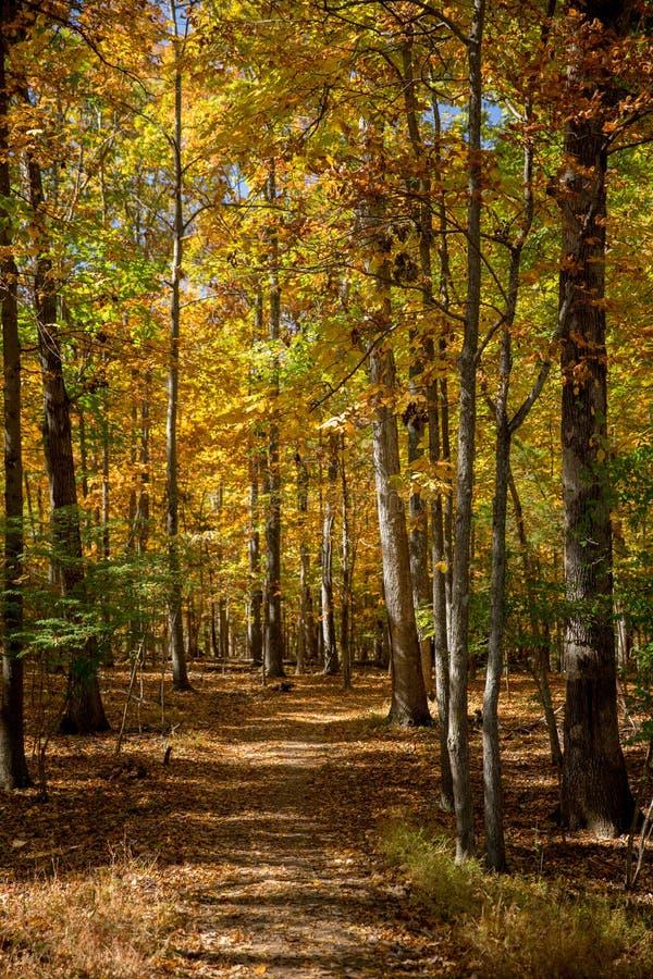 De Gang van de herfst in het hout virginia stock foto