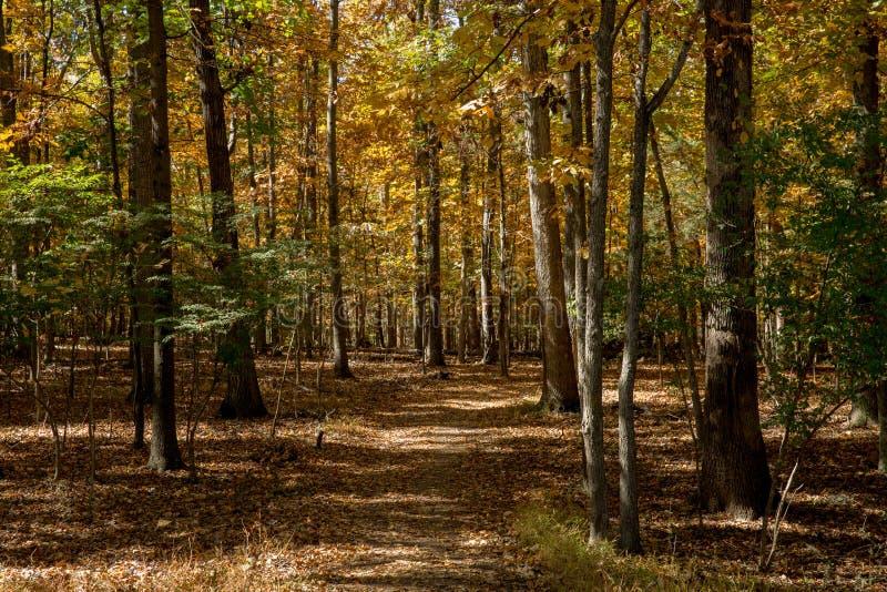 De Gang van de herfst in het hout virginia stock afbeelding