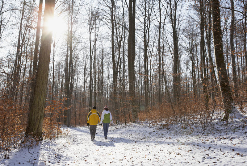 De gang van de winter in het hout royalty-vrije stock foto