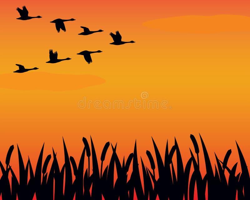 De ganzen en het moeras van het silhouet
