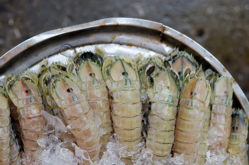 Download De Garnalen Van Bidsprinkhanen Stock Afbeelding - Afbeelding bestaande uit schaaldieren, mantis: 29513049