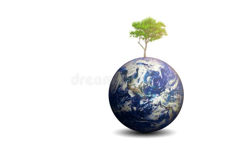 De geïsoleerde boom van Cerbera Odollam en de aarde royalty-vrije stock foto