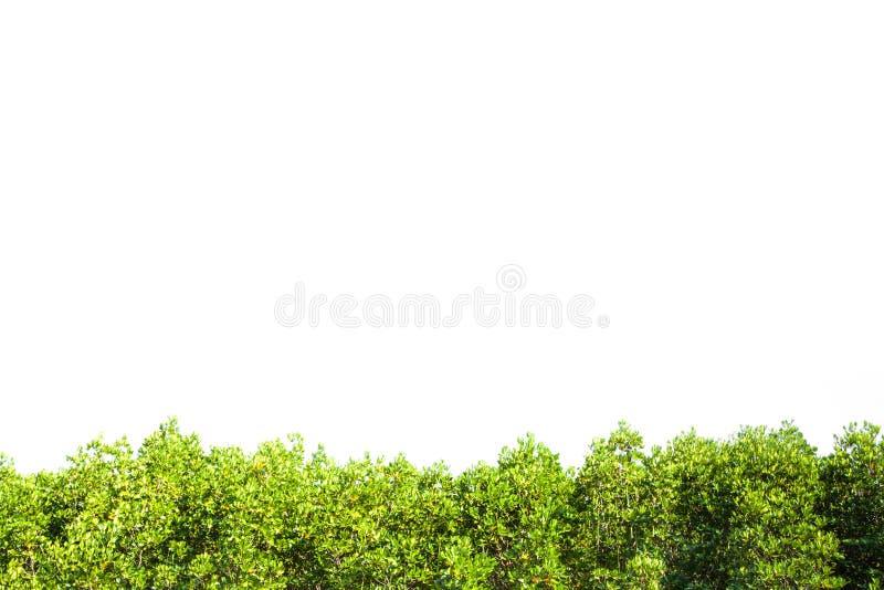 De geïsoleerde grens van CREST mangrove voor achtergrond, Groene installatie royalty-vrije stock foto's