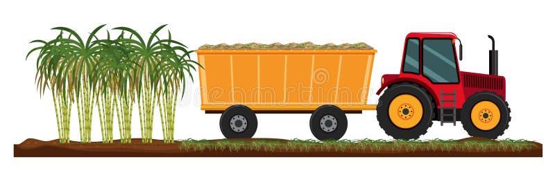 De geïsoleerde landbouw van de suikerrietinstallatie royalty-vrije illustratie