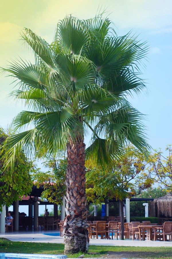 De geïsoleerde Tuin of het Park van de Plamboom De vakantie van de zomer Blauwe hemel Verticaal beeld Vakantie royalty-vrije stock afbeelding
