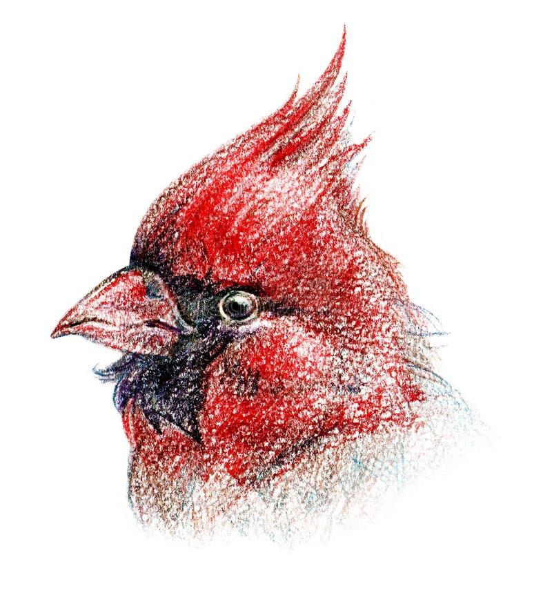 De geïsoleerdew tekening van het vogelkleurpotlood royalty-vrije illustratie