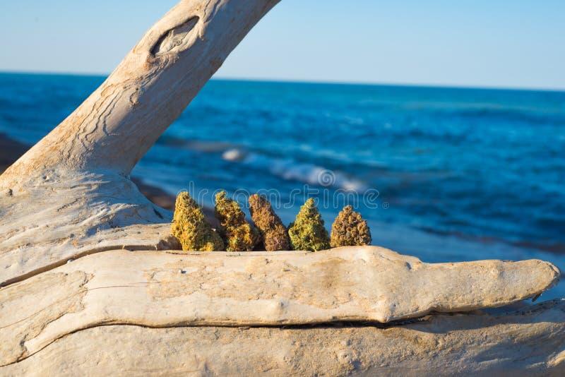 De geassorteerde knoppen van de cannabis medische marihuana tegen oceaan en blu royalty-vrije stock fotografie