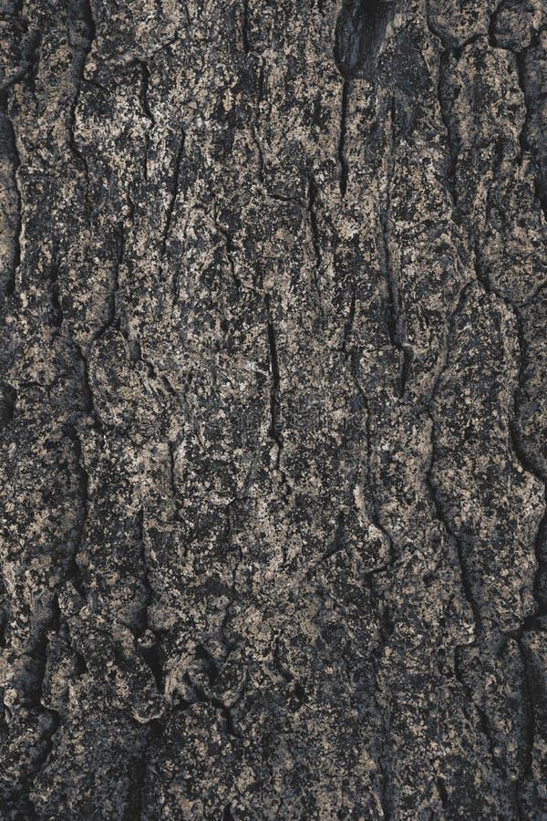 de gebarsten ruwe achtergrond van de boomschors stock fotografie