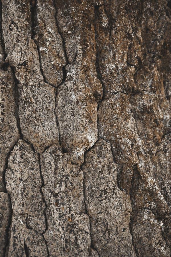 de gebarsten ruwe bruine achtergrond van de boomschors stock afbeeldingen