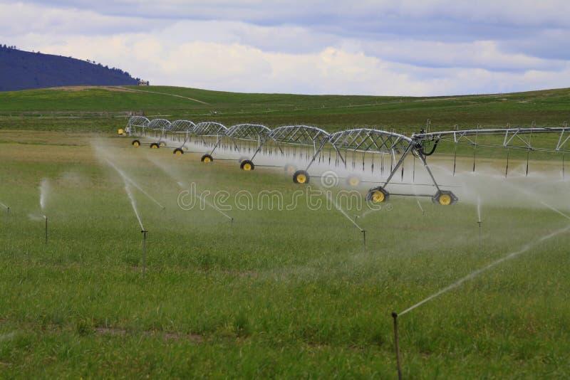 De Gebieden en de Sproeiers van de irrigatie stock afbeelding