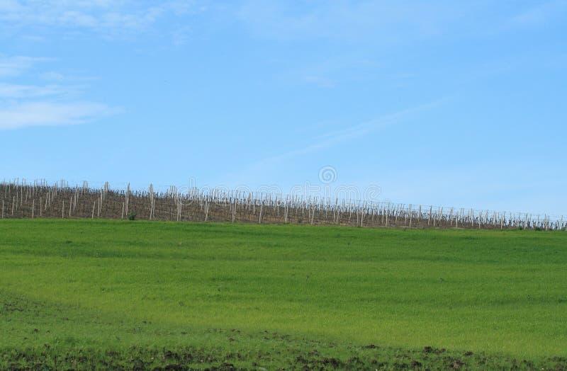 De gebieden en de wijngaarden van de hemel stock fotografie
