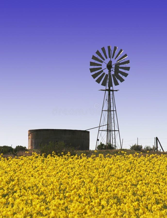 De gebieden van Canola met windmolen stock afbeeldingen