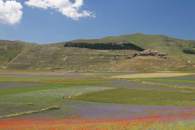 De gebieden van de Castellucciobloem stock foto