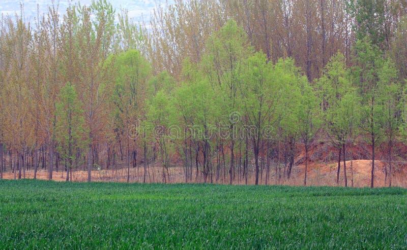 De gebieden van de lente stock foto's
