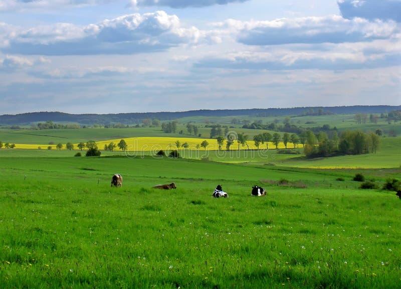 De gebieden van de lente royalty-vrije stock afbeeldingen