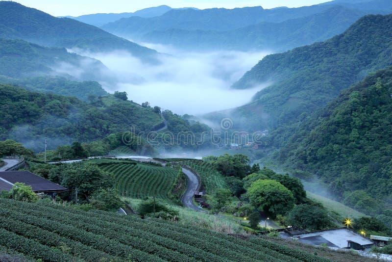 De gebieden van de theeaanplanting bij dageraad met ochtend vertroebelen in de verre vallei, in Pingling, Taipeh, Taiwan stock afbeelding