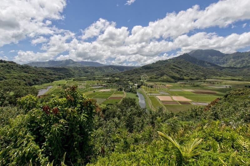 De gebieden van Hawaï Kauai stock afbeeldingen